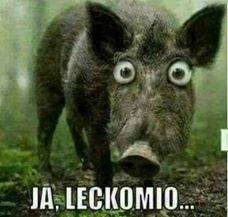 :ZZZlecko